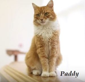 Paddy-the-cat-who-comforts-mourners-300x